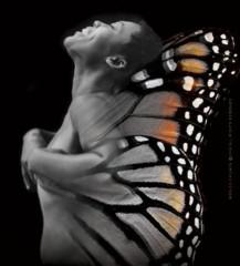 akuyoebutterfly